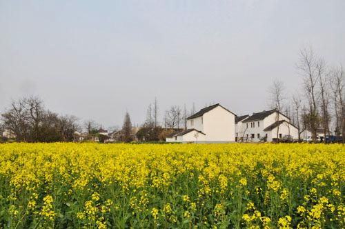 葡萄游戏发源地大裕村