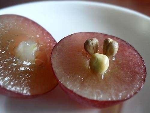 葡萄籽的功效知多少