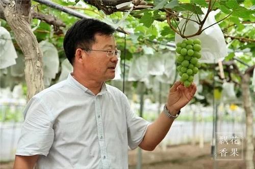 马陆葡萄市场在哪里?