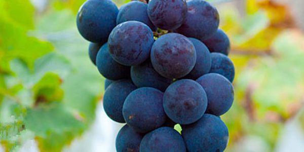 一般在哪里网购马陆葡萄?