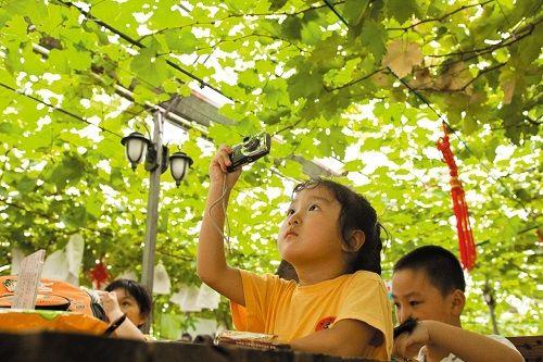 日本山梨县研发新技术 可在葡萄上显示图文
