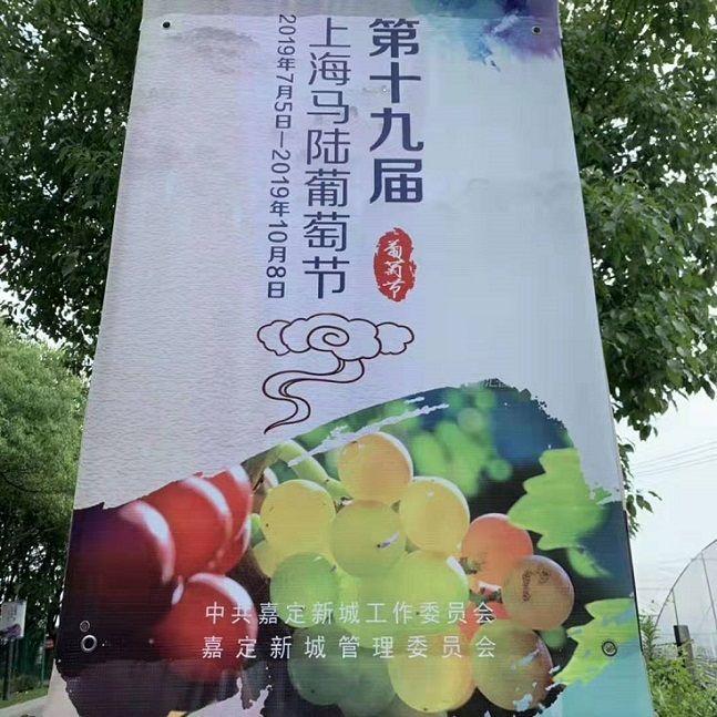 第十九届上海马陆葡萄节今天盛大开幕