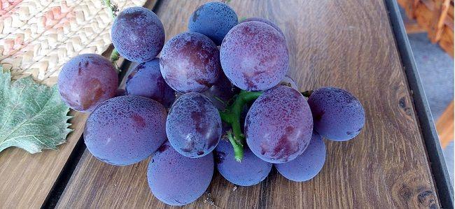 崇明葡萄甜蜜上市