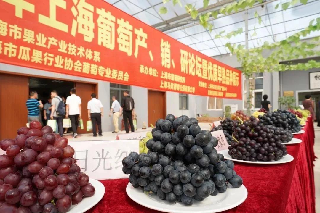 喜讯!嘉定马陆葡萄获评中国特色农产品优势区