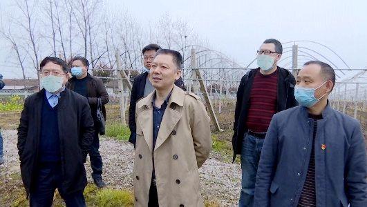 澧县领导调研葡萄产业示范园项目