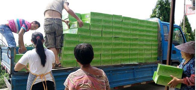 上海夏黑葡萄多少钱1斤