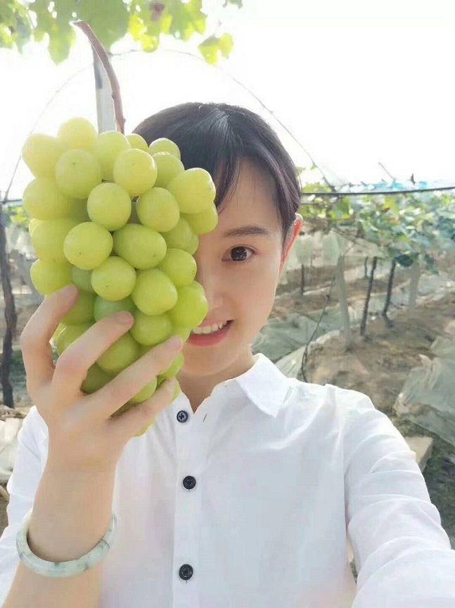 马陆绿葡萄品种是什么?