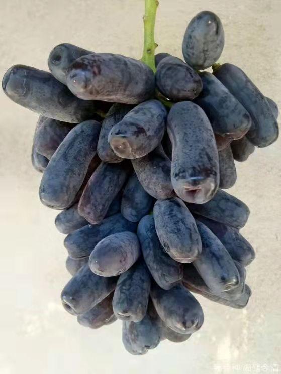 蓝宝石葡萄涉嫌侵权,美国公司要求禁售,我们该如何应对?