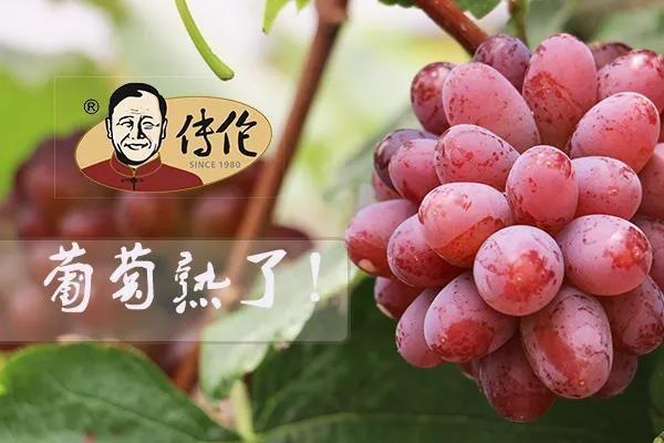 马陆葡萄产地在哪里