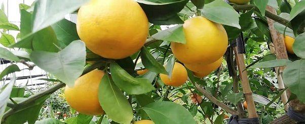 """葡萄、柑橘""""上榜""""英国污染最严重果蔬名单"""